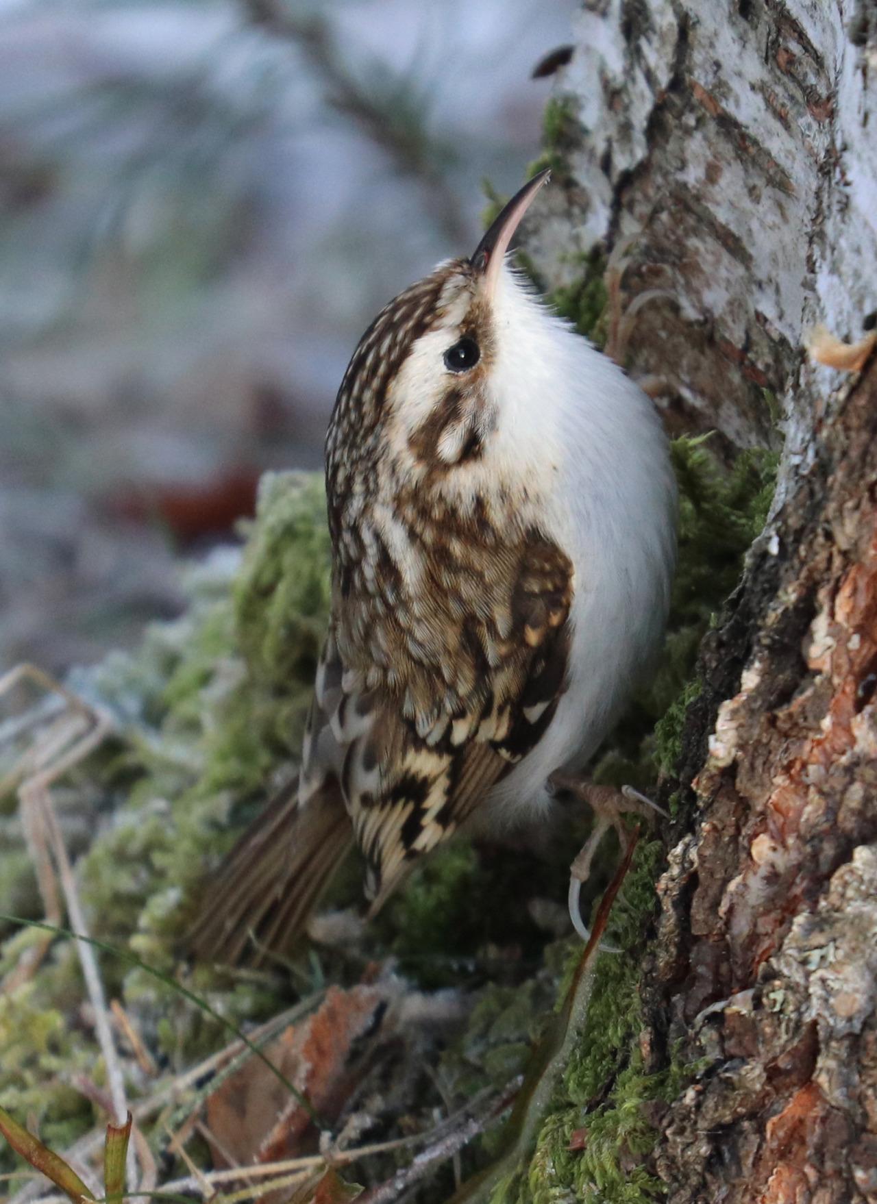 A Grumpy Bird