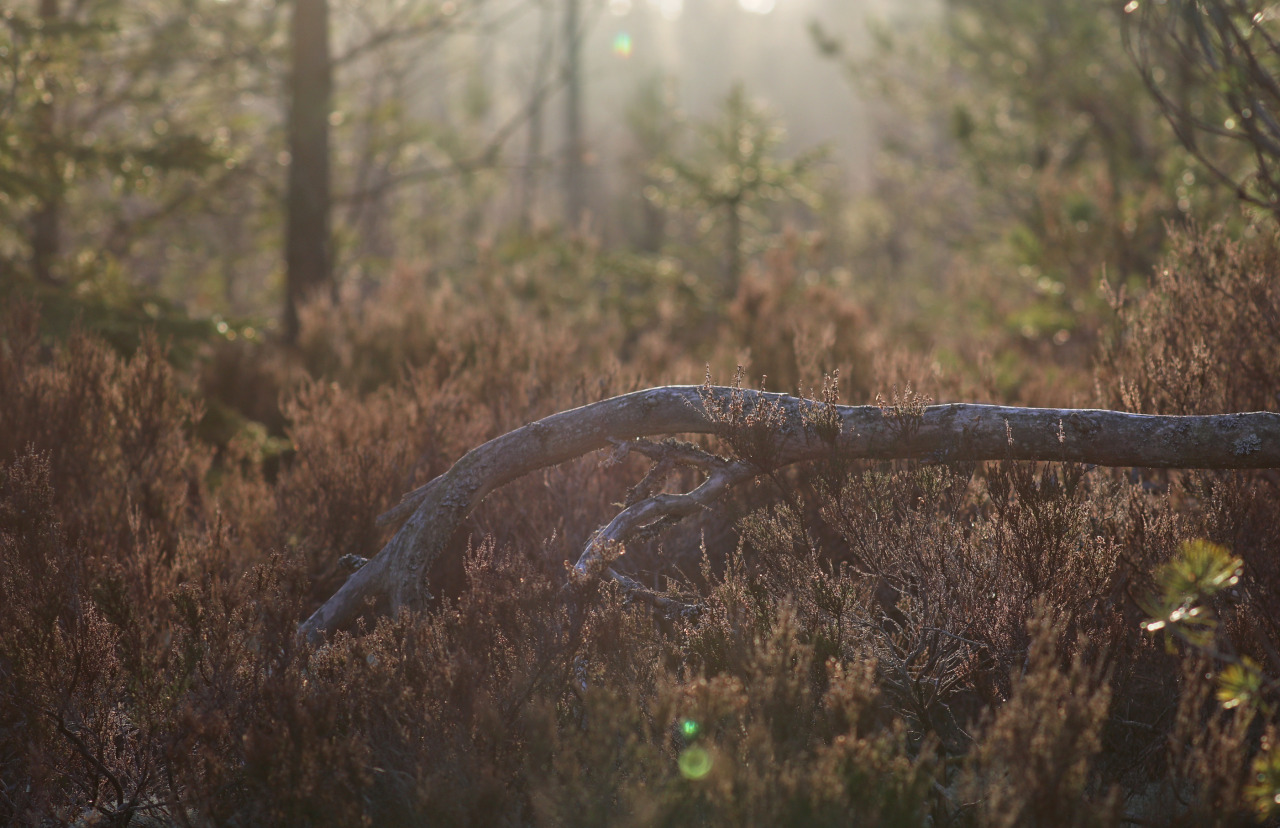 A Day In The Forest (5 pictures)